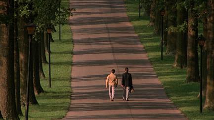 Rain Man, Dustin Hoffman, Tom Cruise, Valeria Golino, Comédia, drama, filme, cine mp4, 10
